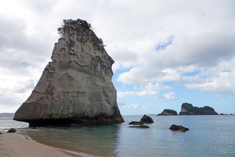 Hoho vaggar på domkyrkaliten vikstranden i Te Whanganui en Hei Marine Reserve i Nya Zeeland royaltyfria foton