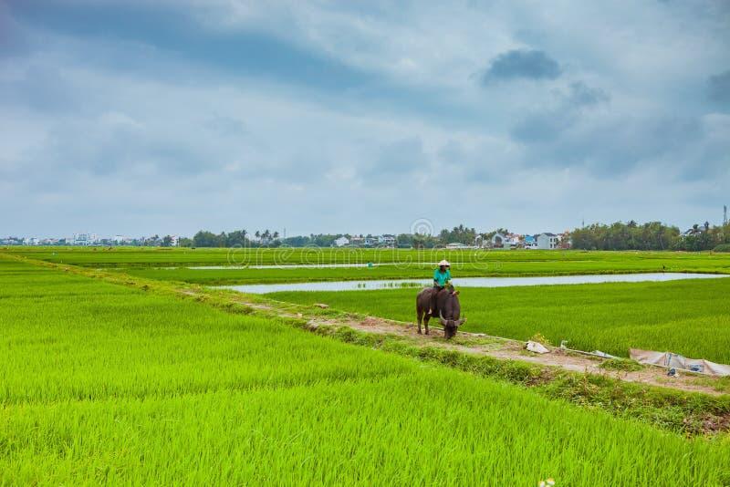 HOI, ВЬЕТНАМ - 17-ОЕ МАРТА 2017: Деревня Tra Que, органическое vegetable поле, около Hoi старый городок, Вьетнам стоковые изображения