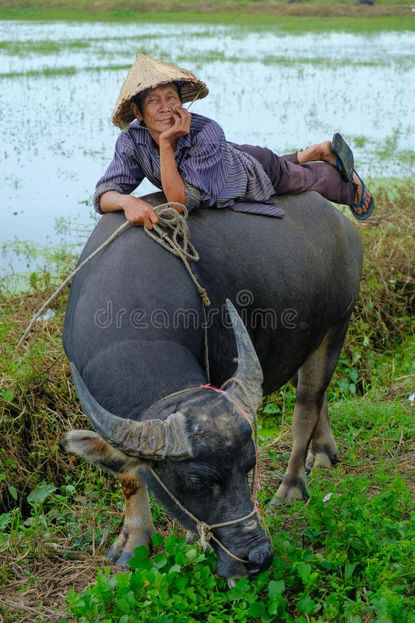 Hoi An/Vietnam, 11/11/2017: Lokale Vietnamese mens met rijsthoed die en/op de rug van een waterbuffel in a liggen ontspannen zitt stock afbeelding