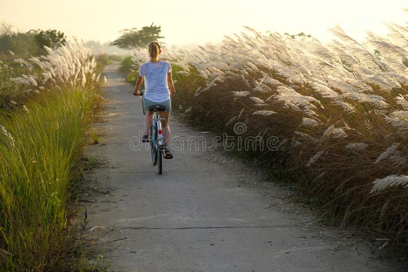 Hoi An/Vietnam, 12/11/2017: Touristische Frau, die durch Felder während des Sonnenuntergangs herein in Hoi An, Vietnam radfährt lizenzfreies stockfoto