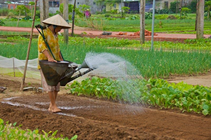 Hoi Wietnam, Listopad, - 2013: Uprawiać ziemię zdjęcia stock