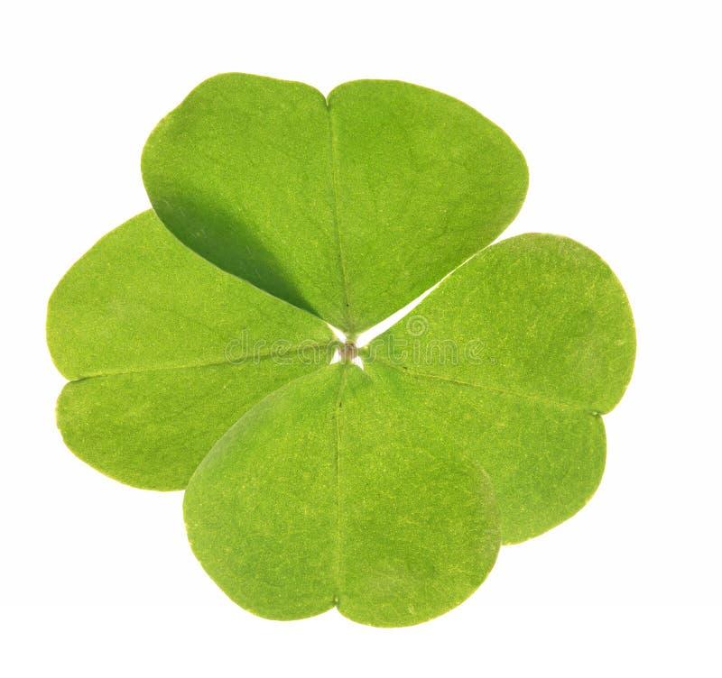 Hoja aislada trébol verde de cuatro elementos imagen de archivo libre de regalías