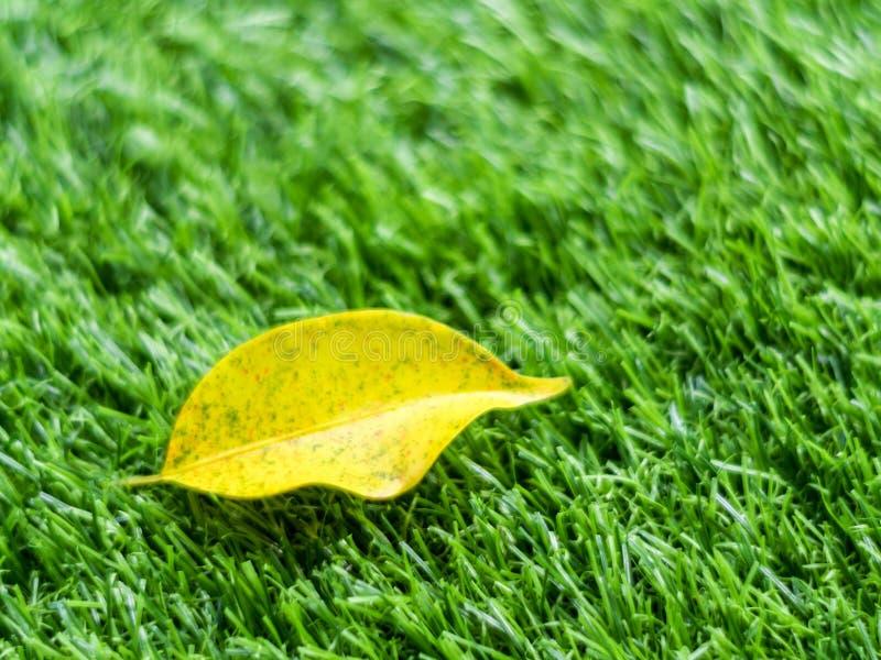 Hoja amarilla de la caída en la hierba artificial por la profundidad baja del fie imagen de archivo libre de regalías