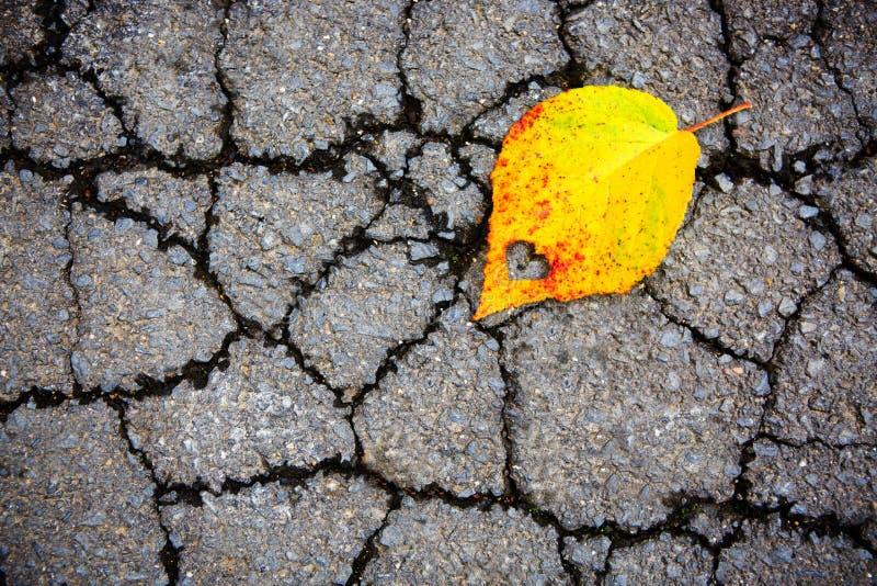 Hoja amarilla de la haya en fondo gris del asfalto fotografía de archivo libre de regalías