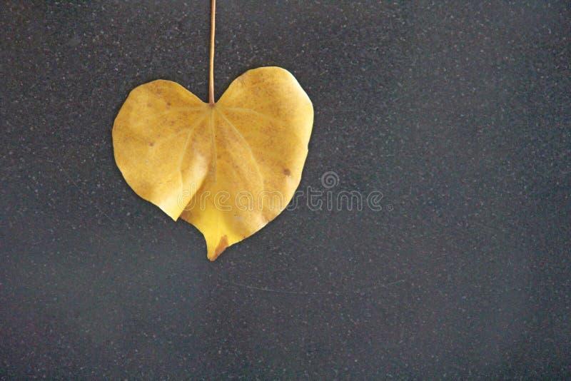Hoja amarilla de un árbol en la forma de un corazón en un fondo negro Diseño romántico del otoño Diseño con el espacio de la copi foto de archivo libre de regalías