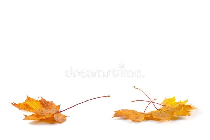 Hoja amarilla del otoño imágenes de archivo libres de regalías