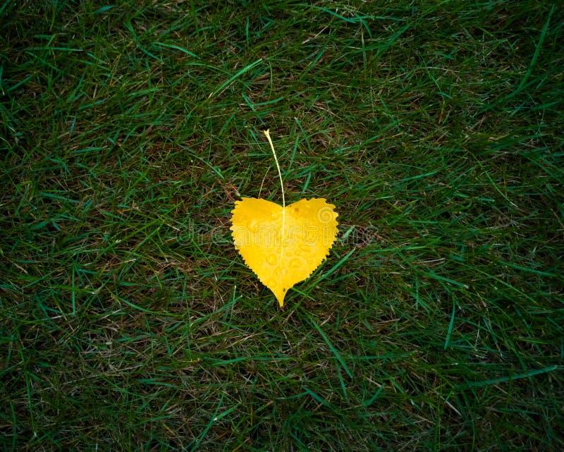 Hoja amarilla en hierba verde fotografía de archivo libre de regalías
