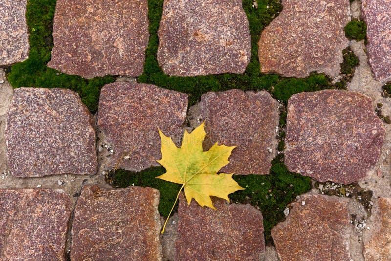 Hoja amarilla en las piedras fotografía de archivo