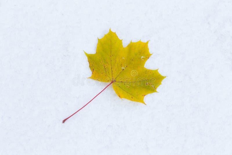 Hoja amarilla en nieve ?ltima ca?da e invierno temprano imagenes de archivo