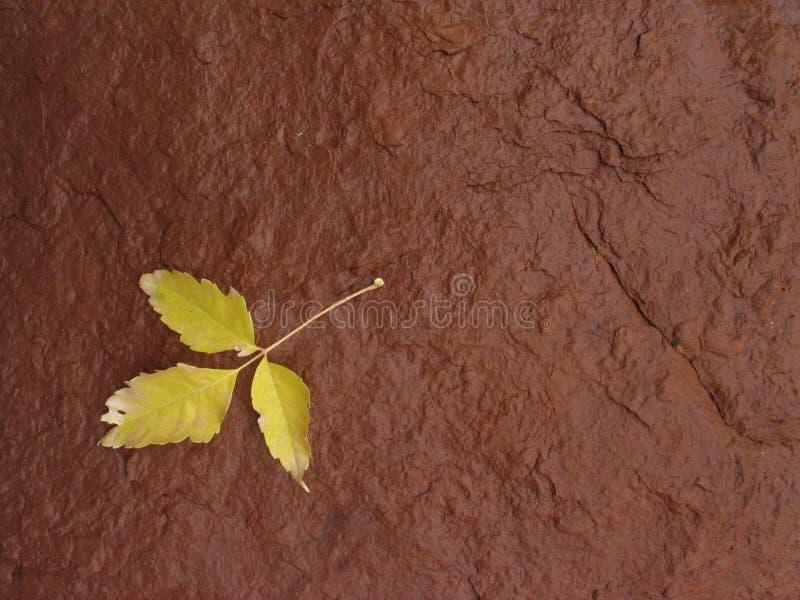Hoja amarilla en roca roja