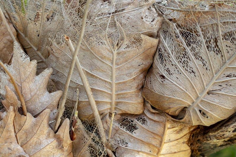 Hoja amarilla seca en la foto del tronco de árbol Estación seca o concepto de la deshidratación Estructura de sequía de la hoja c fotografía de archivo
