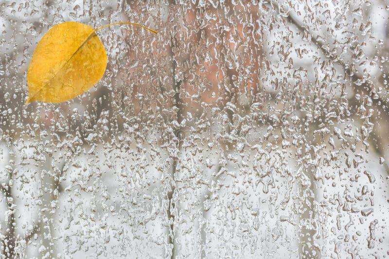 Hoja amarilla y mún tiempo fuera de la ventana, primer imagenes de archivo