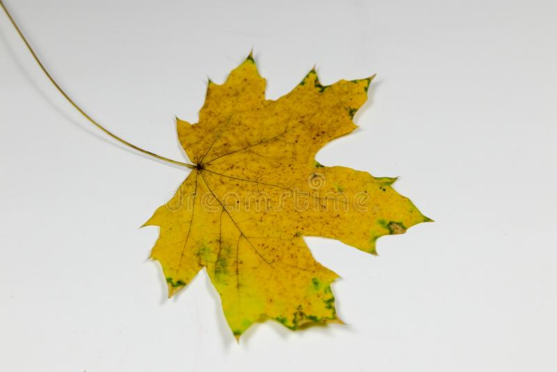 Hoja amarilla y verde imágenes de archivo libres de regalías