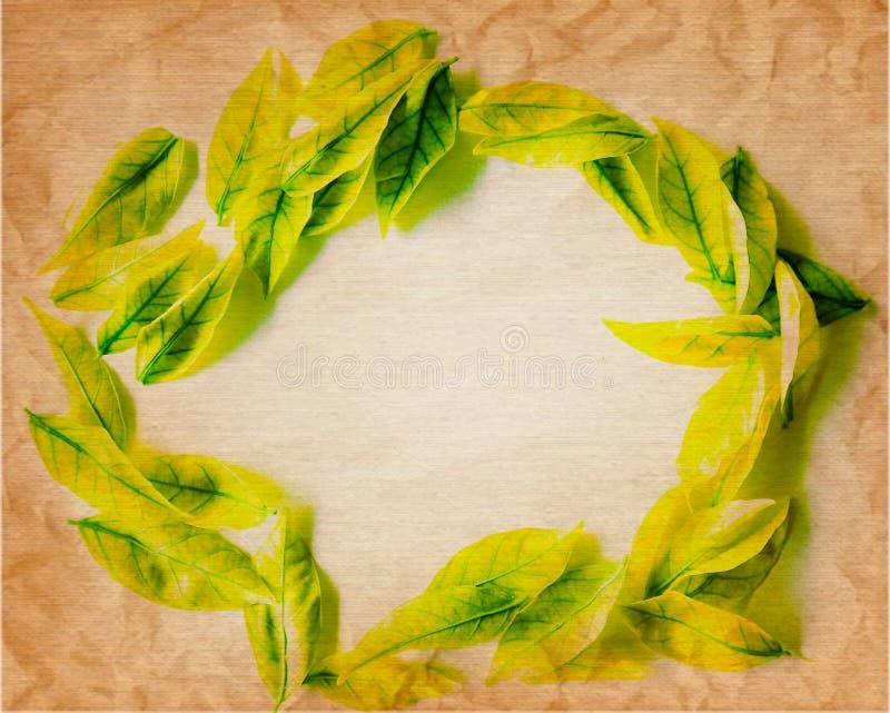 Hoja amarilla y verde del color hermoso del extracto del árbol en el fondo y el papel pintado aislados blancos y marrones fotos de archivo libres de regalías