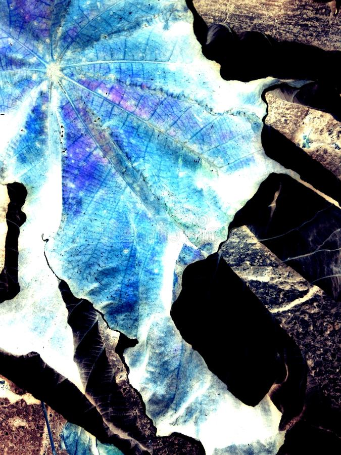 Hoja azul & x28;blue leaf& x29; royalty free stock photo