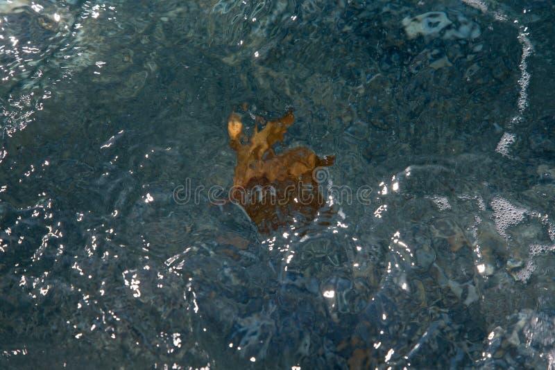 Hoja caida en el agua en un foco selectivo de la costa de mar imagenes de archivo