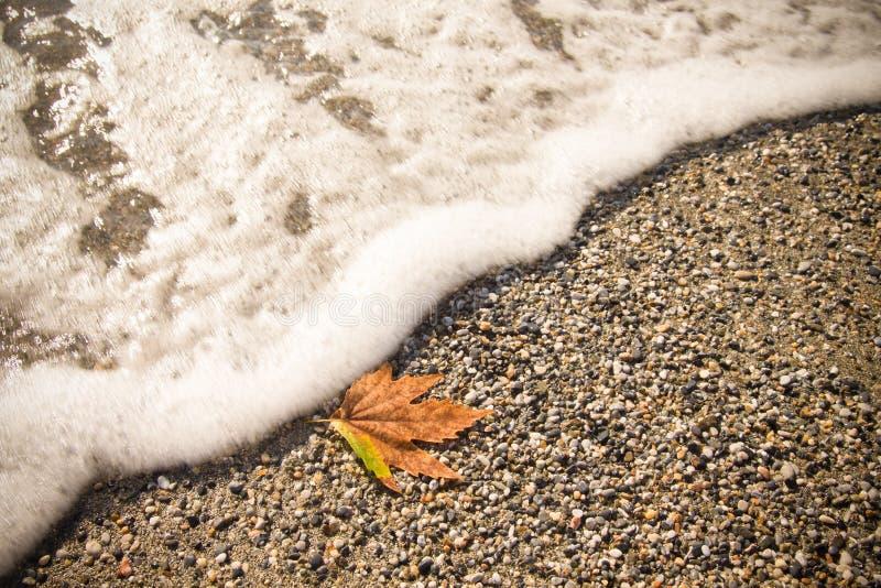 Hoja caida en la arena en una costa de mar entonada fotografía de archivo