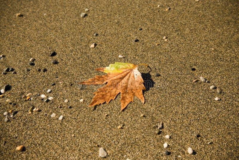 Hoja caida en la arena en una costa de mar entonada imagen de archivo libre de regalías