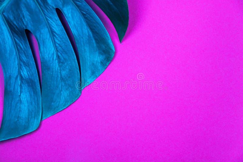 Hoja coloreada de neón del monstera del verde de la planta tropical en fondo violeta rosado plástico ácido fotografía de archivo