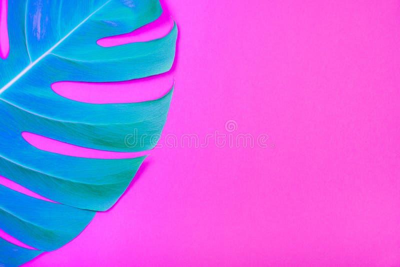 Hoja coloreada neón del monstera del verde de la planta tropical en fondo rosado plástico ácido fotos de archivo libres de regalías