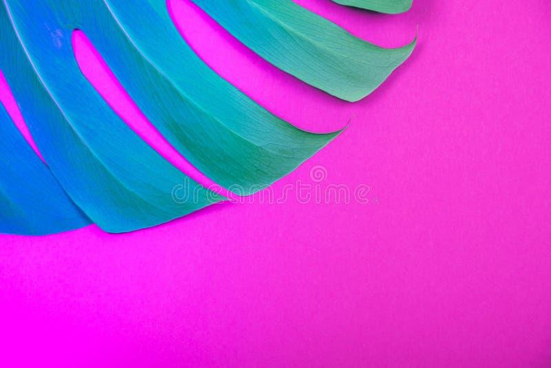 Hoja coloreada neón del monstera del verde de la planta tropical en fondo rosado plástico ácido foto de archivo libre de regalías