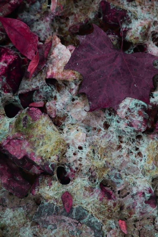 Hoja colorida de la caída en agua fotos de archivo