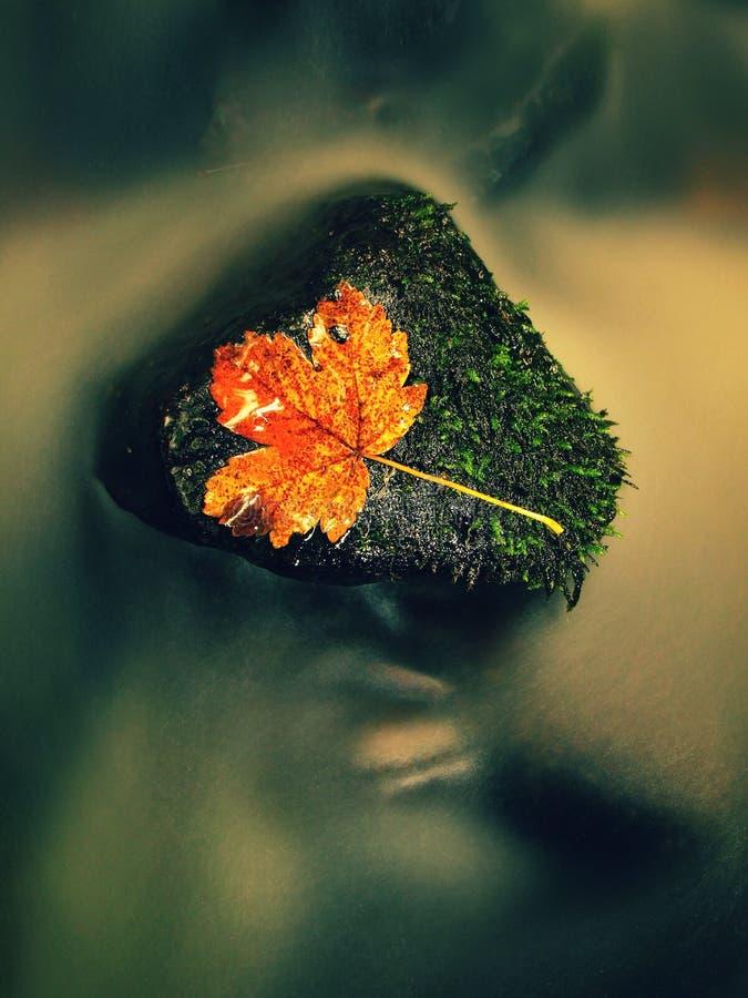 Hoja colorida del otoño Náufrago en piedra mojada del deslizador en corriente imágenes de archivo libres de regalías