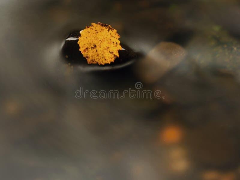 Hoja colorida del otoño Hoja rota amarilla agradable en piedra del basalto en el agua borrosa de la corriente de la montaña foto de archivo