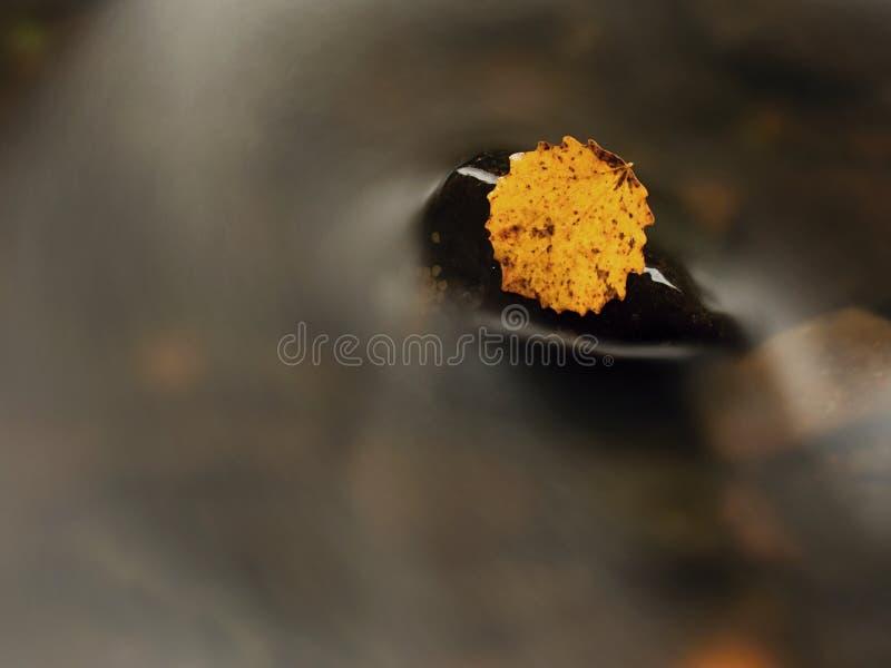 Hoja colorida del otoño Hoja rota amarilla agradable en piedra del basalto en el agua borrosa de la corriente de la montaña foto de archivo libre de regalías