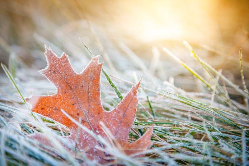 Hoja con Frost fotografía de archivo libre de regalías