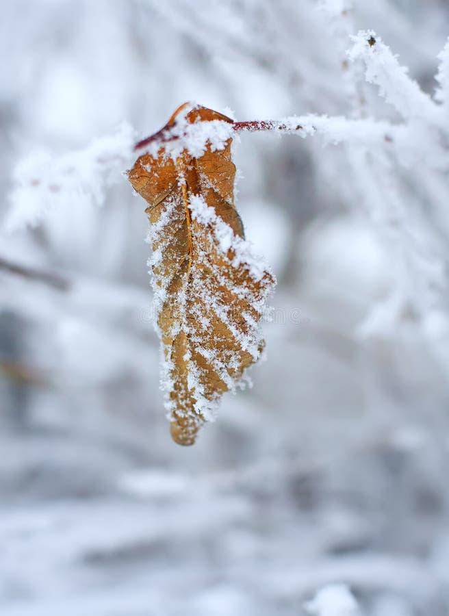 Hoja congelada cubierta con helada fotografía de archivo libre de regalías