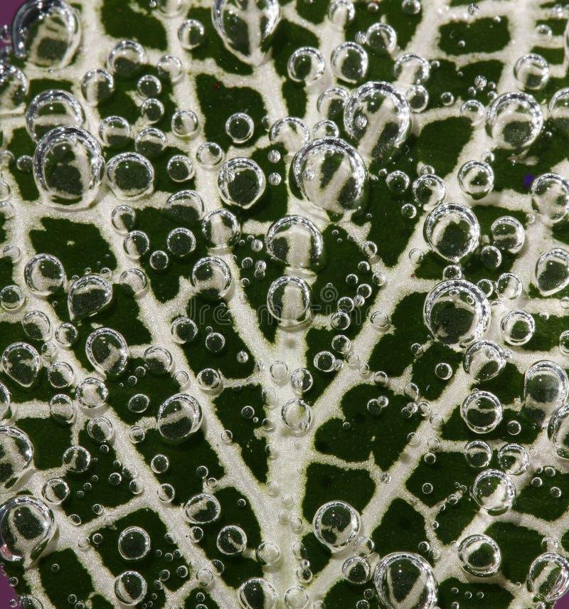 Hoja cubierta con las burbujas fotografía de archivo