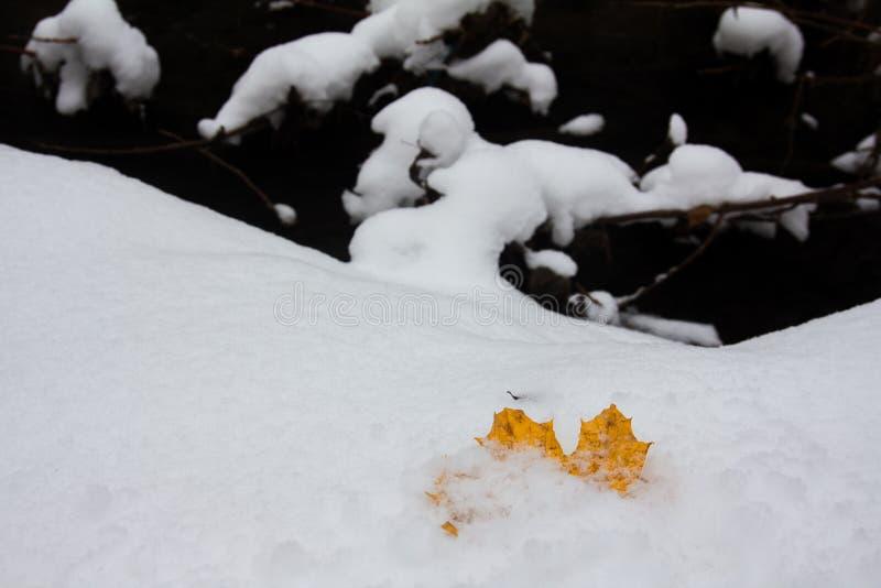 Hoja de arce amarilla caida en un banco nevoso de una corriente del bosque foto de archivo libre de regalías