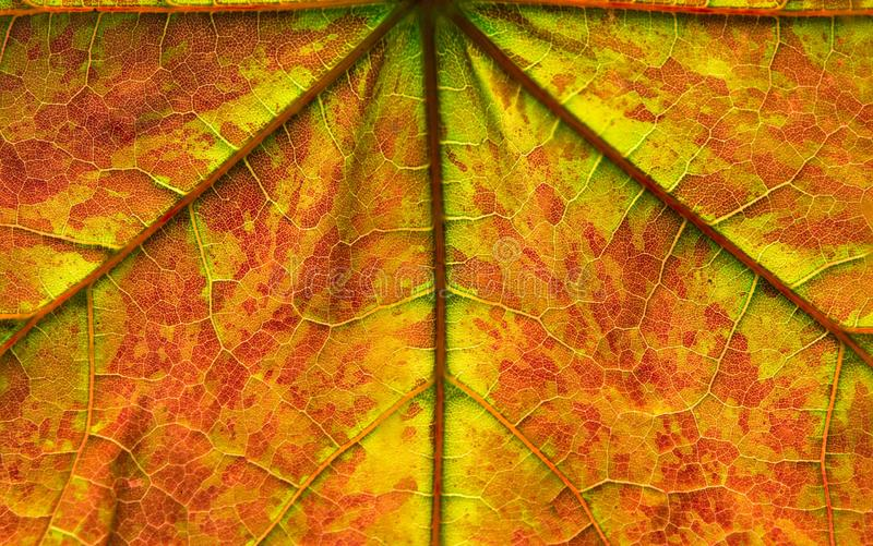 Hoja de arce con color del otoño fotos de archivo libres de regalías
