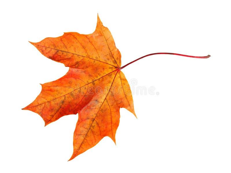 Hoja de arce del otoño fotos de archivo