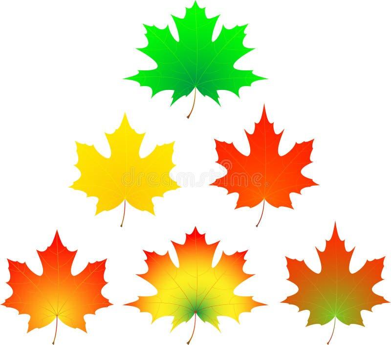 Hoja de arce del otoño. stock de ilustración