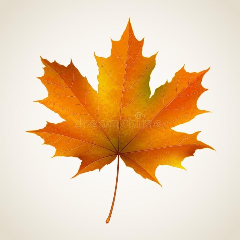 Hoja de arce del otoño ilustración del vector