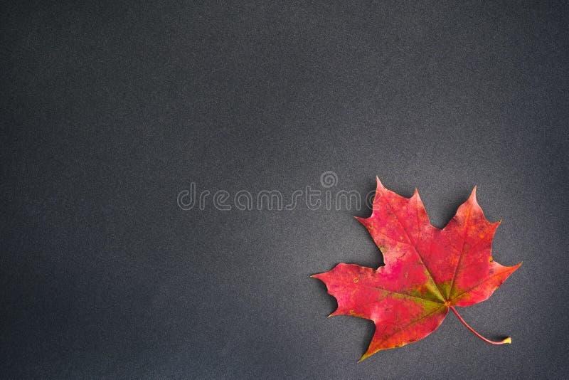 Download Hoja De Arce En Fondo Negro Imagen de archivo - Imagen de otoño, copia: 100525397