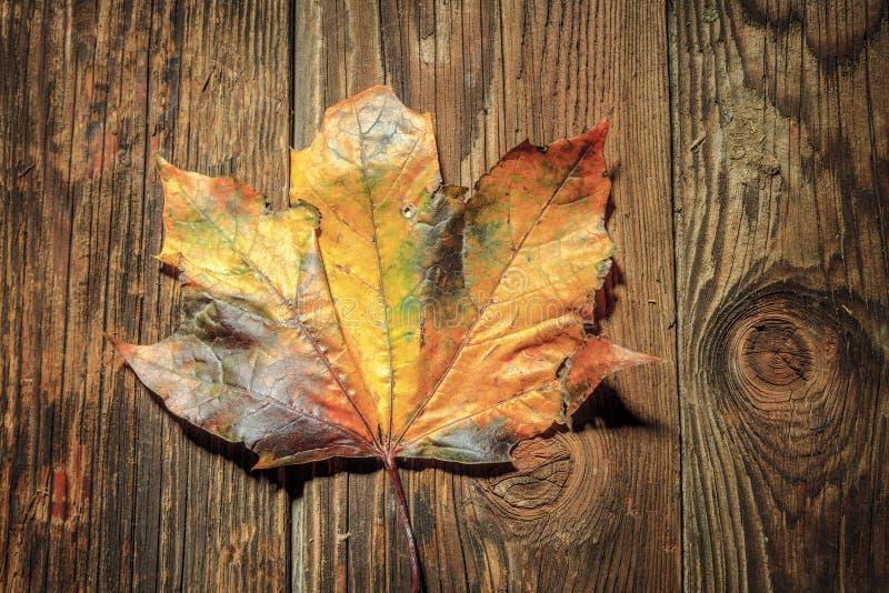 Hoja de arce en los tableros de madera fotos de archivo
