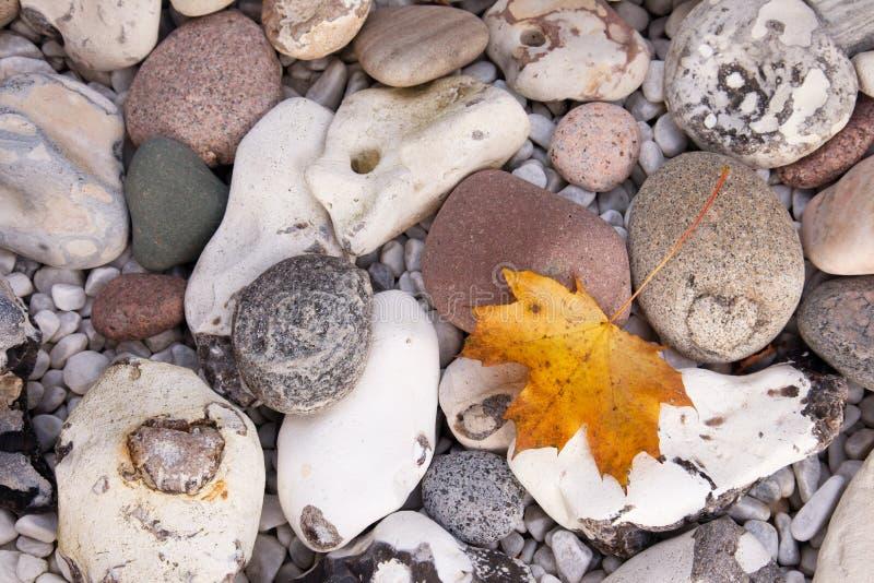 Hoja de arce en piedra foto de archivo libre de regalías