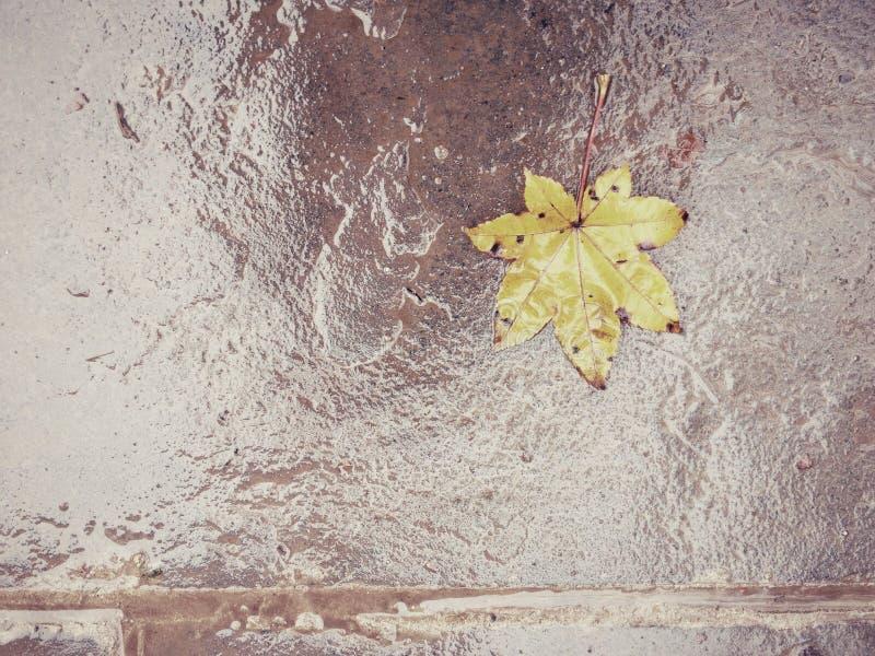 Hoja de arce en piso mojado imagen de archivo
