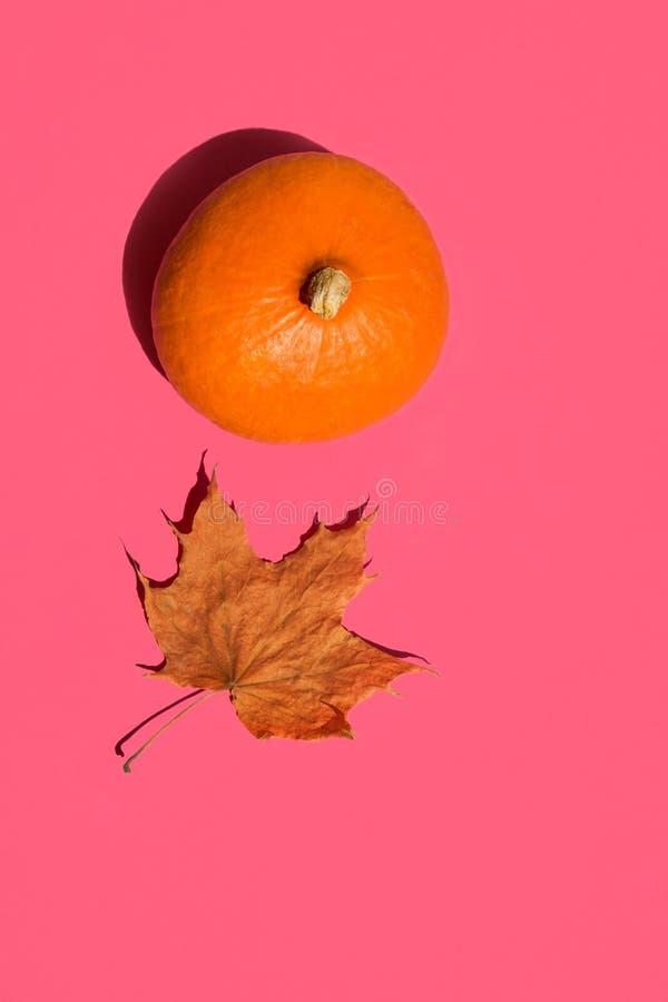 Hoja de arce seca de la calabaza anaranjada brillante de Hokkaido en fondo rosado fucsia sólido Sombras fuertes de la luz del sol foto de archivo