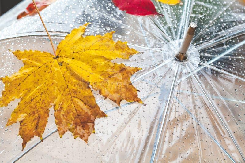 Hoja de arce y gotas de agua hermosas en un paraguas transparente imagen de archivo libre de regalías