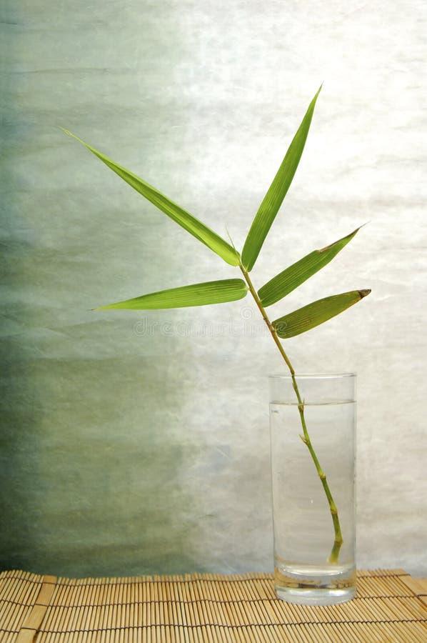 Hoja de bambú imágenes de archivo libres de regalías
