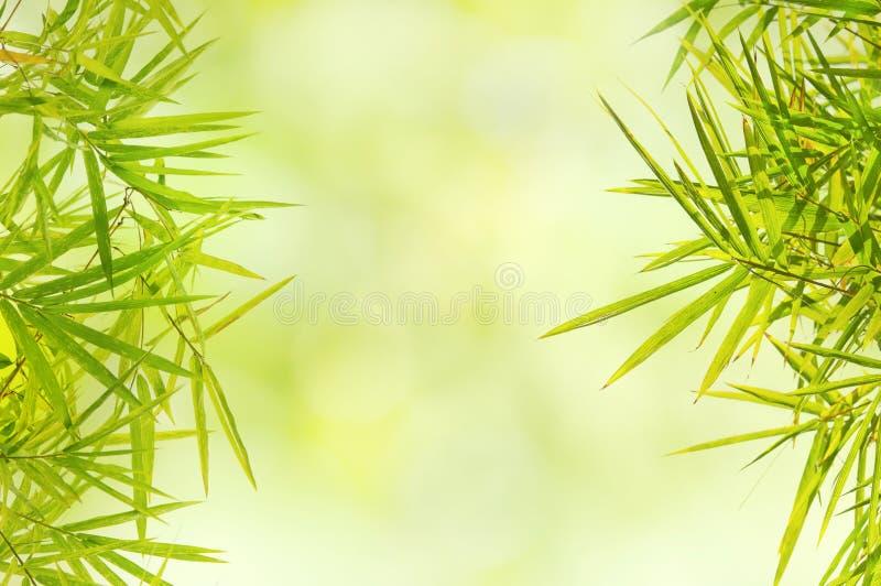 Hoja de bambú verde natural en fondo de la falta de definición imagen de archivo