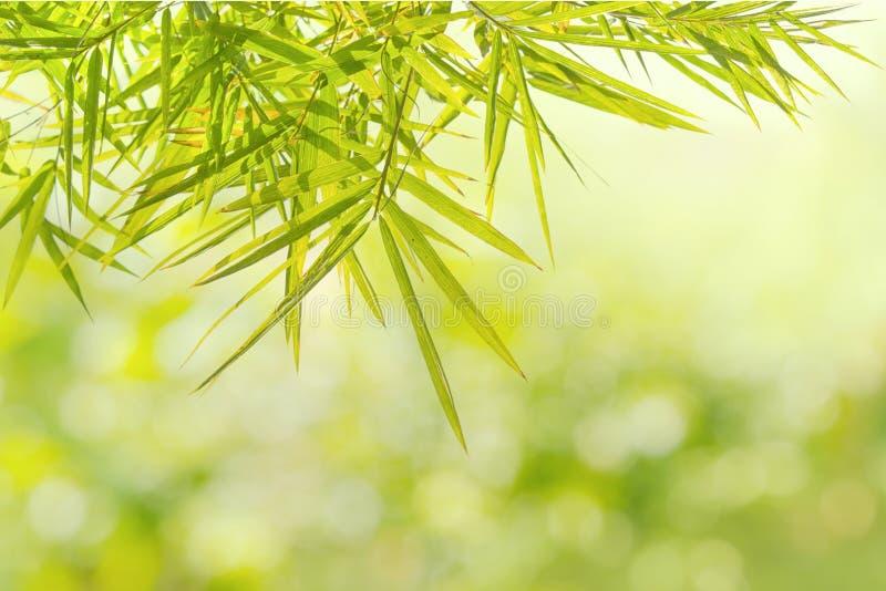 Hoja de bambú verde natural en fondo de la falta de definición fotografía de archivo