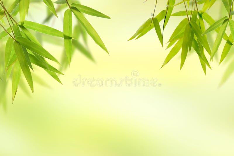 Hoja de bambú y fondo verde suave ligero fotografía de archivo
