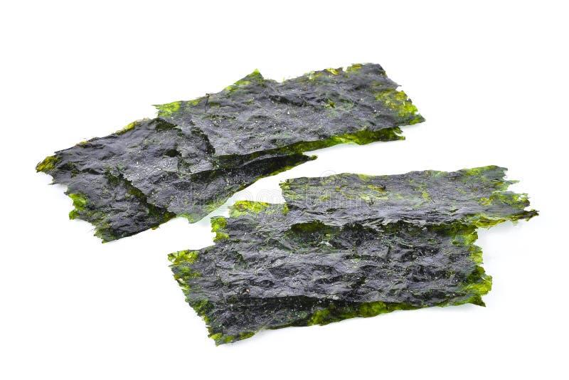 Hoja de la alga marina secada, alga marina curruscante aislada en el backgro blanco imagen de archivo libre de regalías