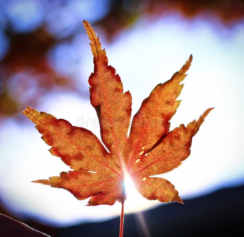 Hoja de la caída con la estrella del sol a través del borde fotos de archivo libres de regalías