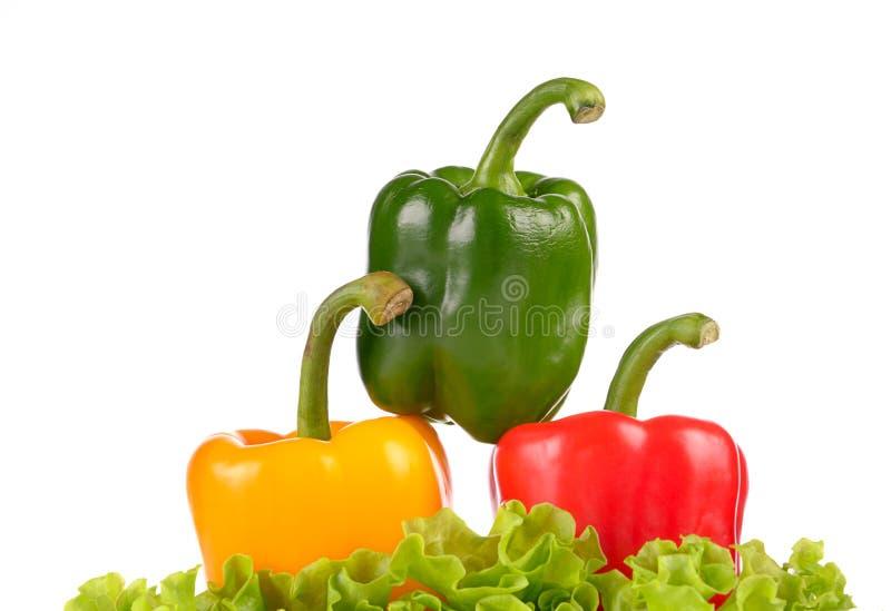 Hoja de la ensalada del pepperson del verde amarillo y del rojo aislada imagen de archivo